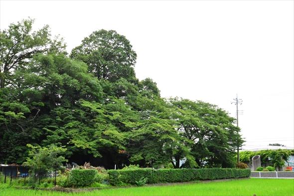tachikawaparkDSC_3202