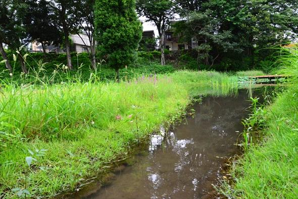tachikawaparkDSC_3213