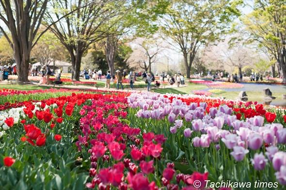 tulip201920190416-DSC_0245