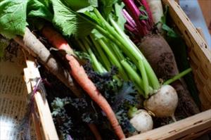 立川の農家さんも応援しよう!/おうちごはんで朝に取れた野菜が食べられる立川の日常に感謝。