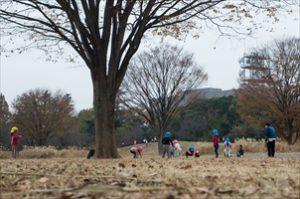 Tachikawa Photo Essay『落ち葉の明日』