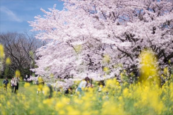 spring201620160406-DSC_3010