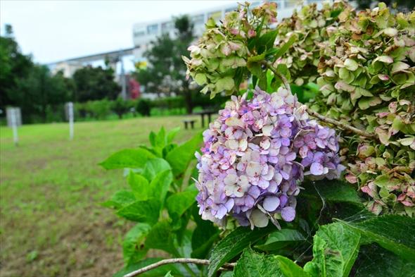 tachikawaparkDSC_3080