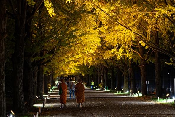 nightwalk20191108-DSC_2008