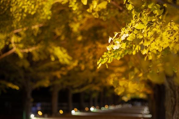 nightwalk20191108-DSC_2013